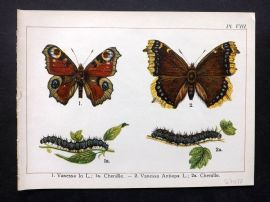 Joanny Martin 1902 Antique Butterfly Print 08